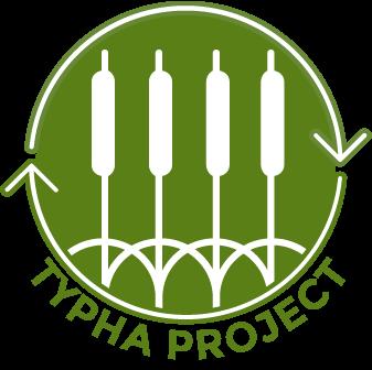 developing economic uses of invasive Typha biomass